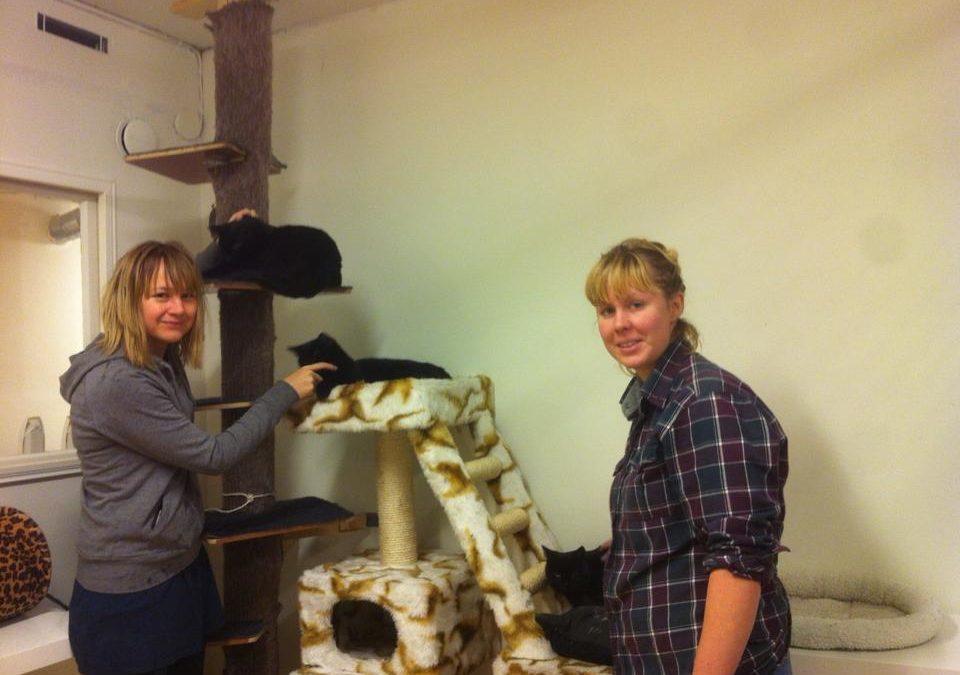 Radio Kaggeholm om rawfood, eko-liv och volontärarbete på Fisksätra katthem.